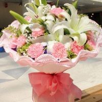 11 Pink Carnations