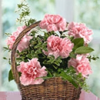 Carnation Basket